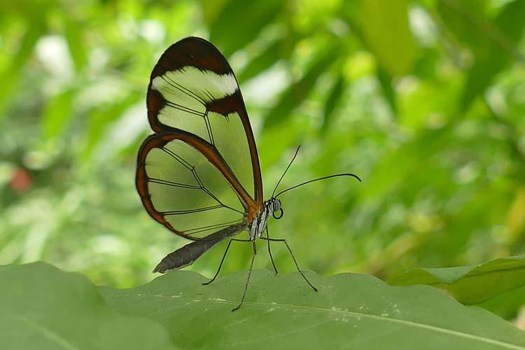 Life Coaching Ken Routson Glass Winged Butterfly